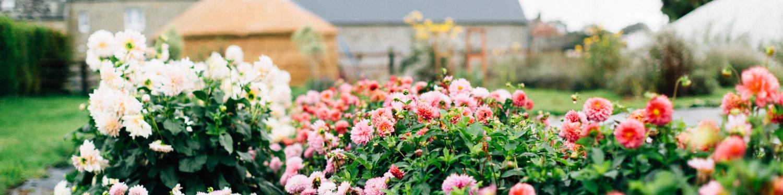 Fleurs locales